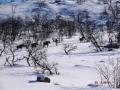 vinter_dyr